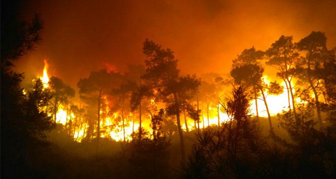Dünya 2018 yılında 12 milyon hektar orman daha kaybetti
