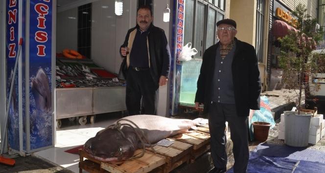 200 kiloluk köpek balığı görenleri hayrete düşürdü