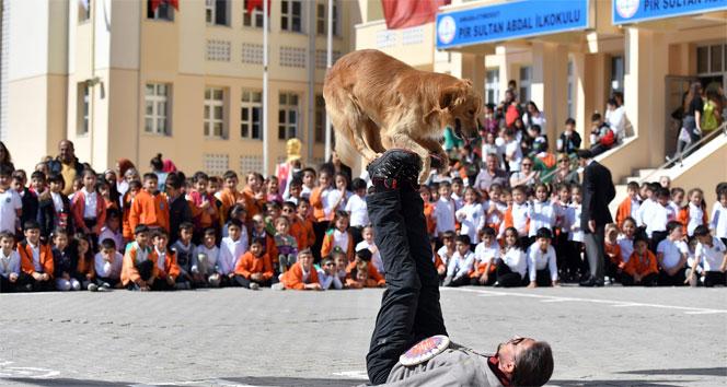 Ankara Buyuksehir Belediyesinden Hayvanlari Koruma Gunu Etkinligi