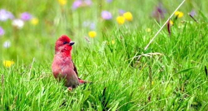 Ardahan'da 90 kuş türüne rastlandı