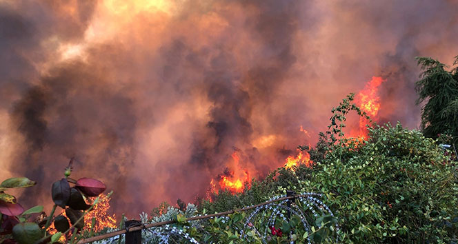 Başsavcılık orman yangını ile ilgili soruşturma başlattı