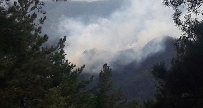 Hatay'da orman yangını...