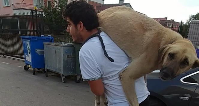 Hasta köpeği tedavi ettirmek için...