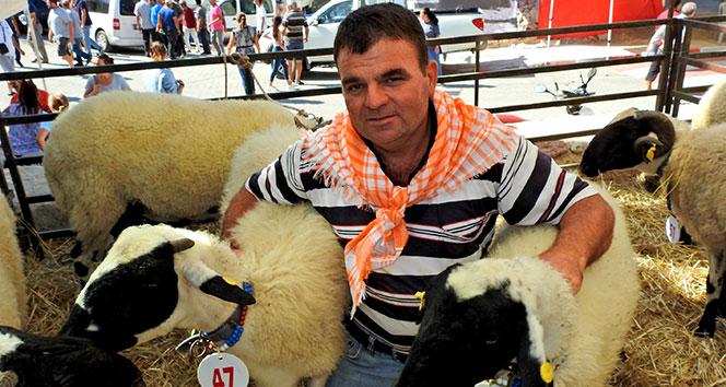 Çeşme'nin ünlü sakız koyunları yarıştı