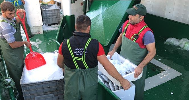Balıkçılar Karadeniz'den 40 ton palamutla döndü!