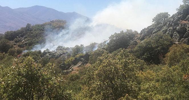 Aksaray'da orman yangını...