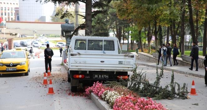 Kontrolden çıkan kamyonet çam ağacına çarparak durabildi