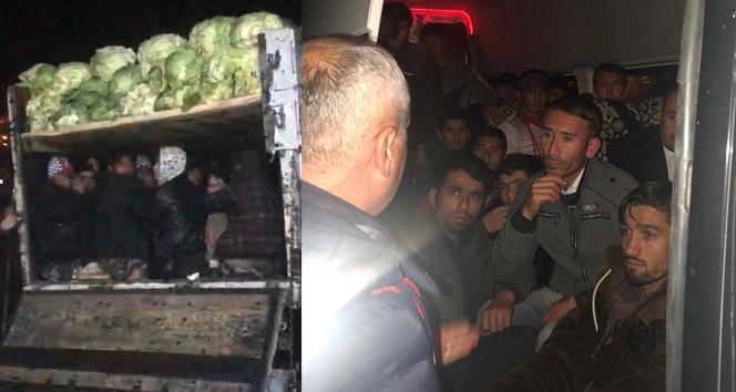 Lahana yüklü kamyonette 38 kaçak göçmen yakalandı