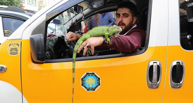 İguanasıyla birlikte müşteri bekliyor