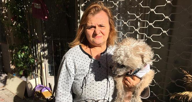 Hayvanseverden hırsıza çağrı: 'Köpeğimi getirsin şikayetimi çekip ödül vereceğim'