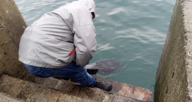 Tarabya sahilinde ölü yunus balığı bulundu
