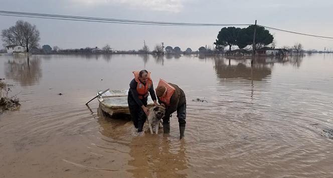 Kiraladığı tekneyle köpeğini kurtardı