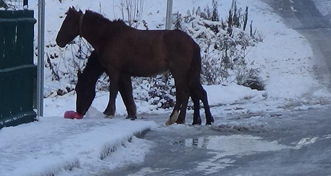 Başı boş atlar sokak sokak yiyecek aradı