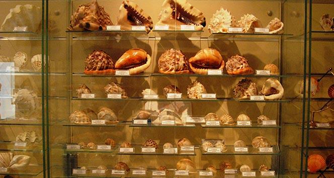 Müzede sergilenen deniz kabuğu 460 milyon yıllık çıktı