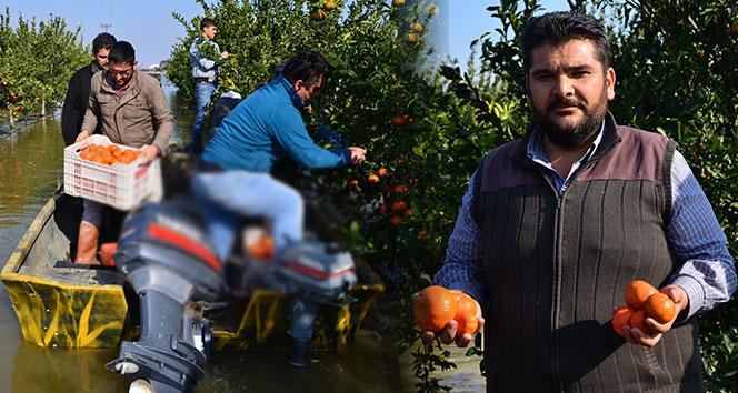 Gölovası'na dönen Çukurova'da kayıkla mandalina hasadı