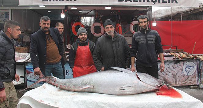 2 metrelik balığı gören bol bol fotoğraf çekti