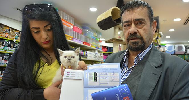 Petshopçulardan merdiven altında hayvan satışı uyarısı