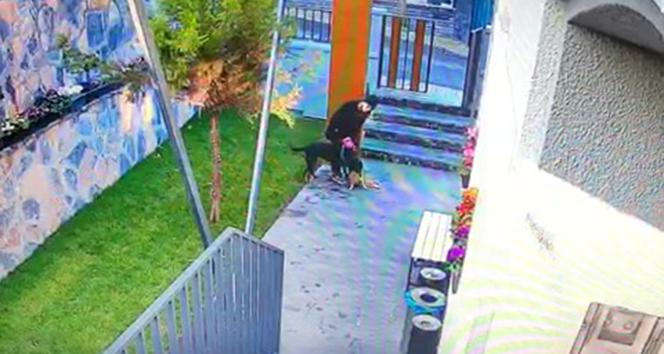 Köpek kediyi parçaladı, vicdansız kadın sadece izledi