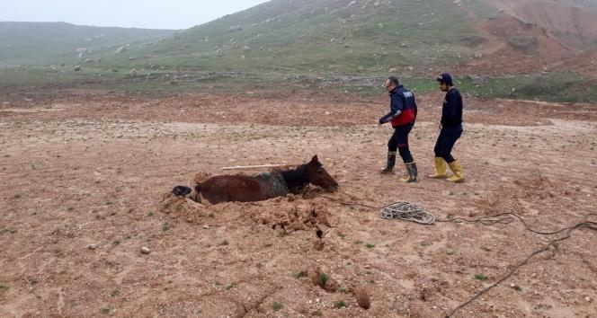 Bataklığa saplanan atı itfaiye kurtardı!