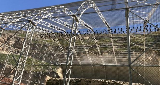 Şanlıurfa'da 261 kelaynak doğaya bırakıldı