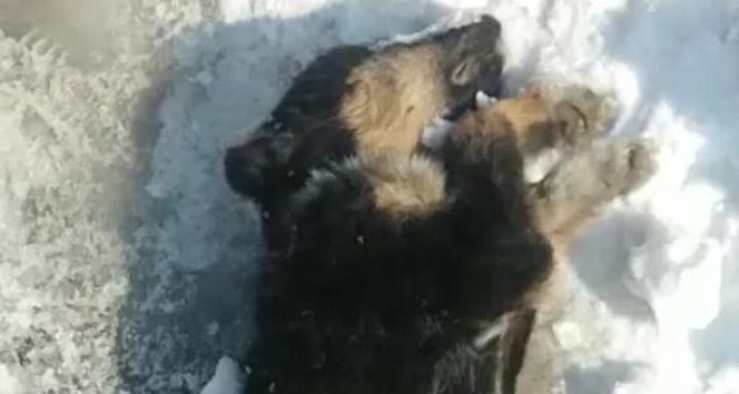 Yavru köpek dondurucu soğuklara dayanamadı