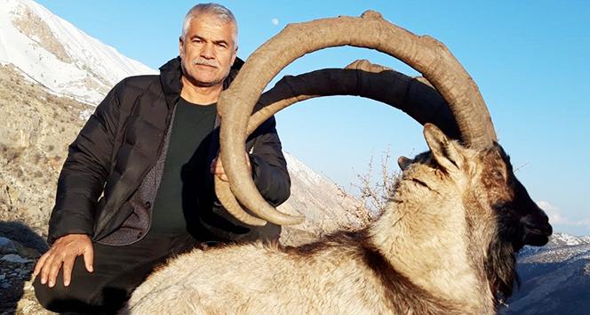 Boynuz uzunluÄ?u 127 santim olan yaban keçisi avlandı ile ilgili görsel sonucu