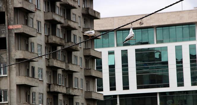 Elektrik kablosuna takılan martı 7 saat sonra kurtarıldı