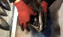 Balığın solungacında uyuşturucu kaçakçılığı