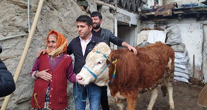 Bir istedi, beş ineği oldu |Sabiha nine hayırseverlere ve Cumhurbaşkanı Erdoğan'a teşekkür etti