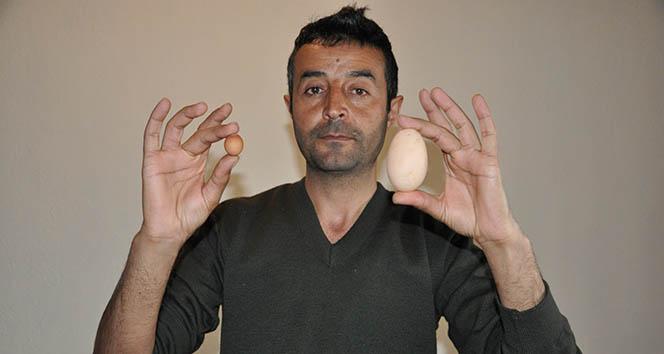 2,85 gramlık yumurta şaşırttı