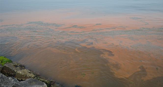 Denizdeki turuncu renk tüm sahili sardı