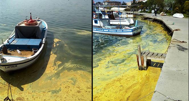 Ayvalık'ta deniz üzerindeki sarı tabaka şaşırttı