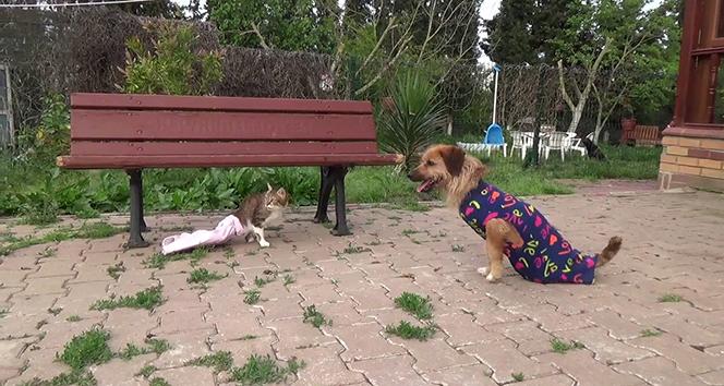 Engelli kedi ile köpeğin göz yaşartan dostluğu