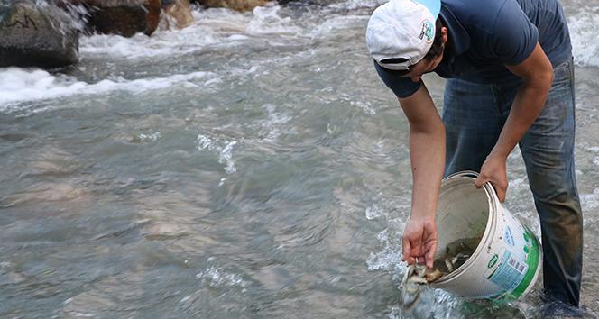 Derenin yatağı değiştirilince balıkları kurtarmak köylüye düştü