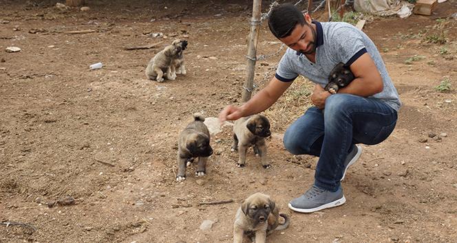 Sel sularına kapılan yavru köpekleri gözünü kırpmadan kurtardı