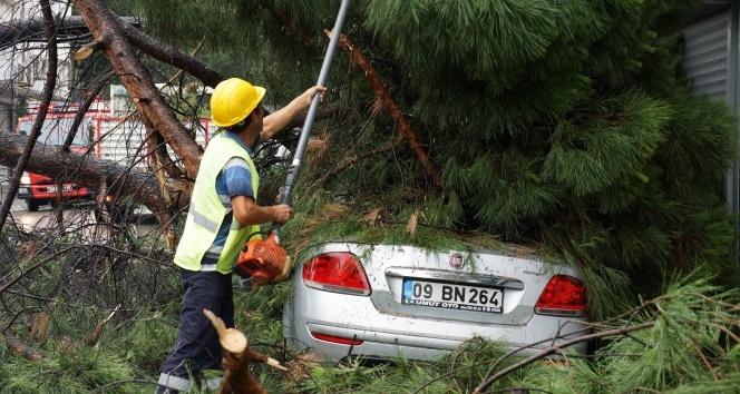 Asırlık çam ağacı apartman ve arabanın üstüne devrildi