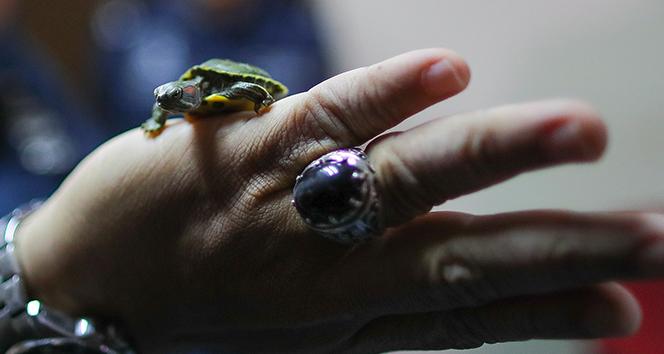 Malezya'da 5 binden fazla kaçak kaplumbağa ele geçirildi