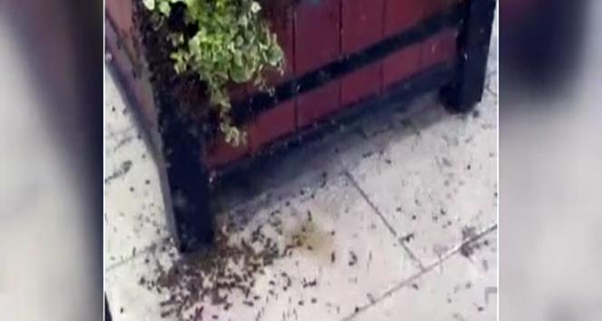 İrlanda'da arılar paniğe neden oldu