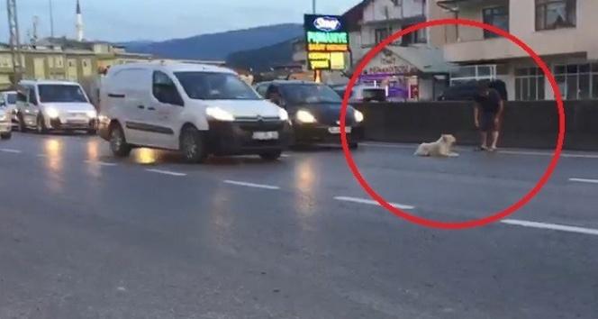 Yolun ortasına yatan köpek trafiği felç etti