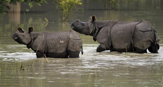 Hindistan'da sel: Vahşi hayvanlar firarda
