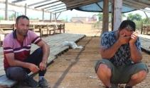 Antalya'da kiralık tır şoförünün 25 büyükbaş hayvanla ortadan kaybolduğu iddiası