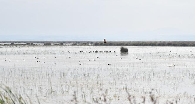 Başkan Demir: 'Kızılırmak Deltası Kuş Cenneti 3 yıl içerisinde daimi listeye alınır'