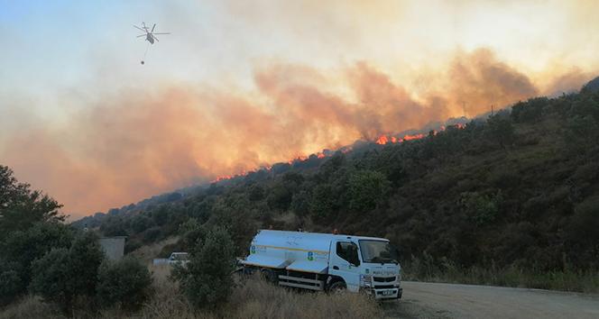 Erdek'te orman yangını