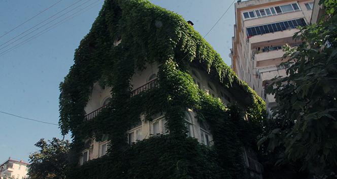 4 katlı bina sarmaşıkla kaplanınca bir anda ilgi odağı haline geldi