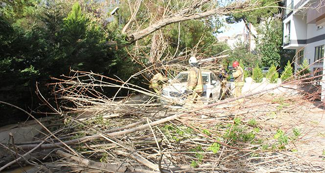 Kadıköy'de devrilen ağaç paniğe yol açtı