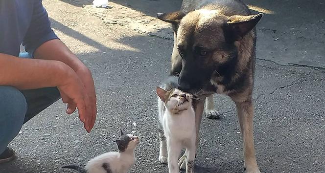 Kedi ve köpeğin sevgisi görenleri şaşırtıyor