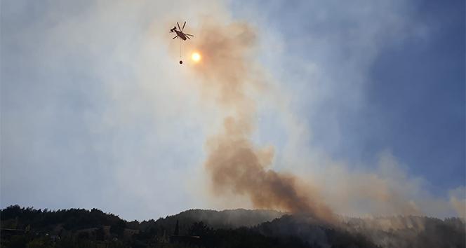 Osmaniye'de orman yangını! 5 hektarlık ormanlık alan kül oldu