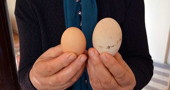 Dev yumurta şaşırtıyor