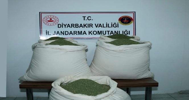 Öğrenci servisinde 176 kilogram esrar ele geçirildi