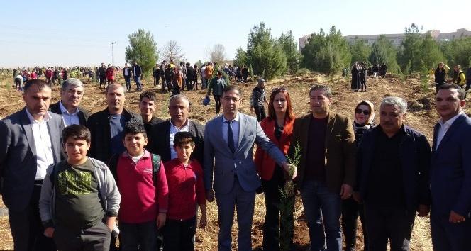 MHP Diyarbakır İl Başkanı Kayaalp fidan dikti